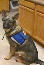 Amber GeorgeAnna Bell's Service Dog