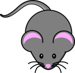 gray-mouse-hi-1