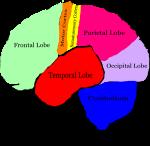 the-brain-hi