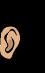 Ear_clip_art-1
