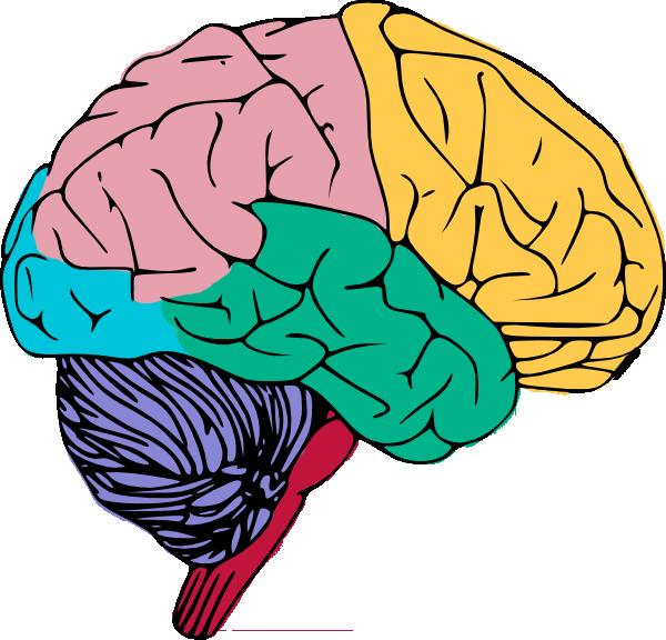 brain-20clip-20art-brain4